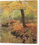 White Ash And Stream In Autumn Wood Print