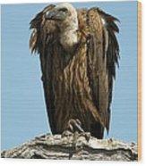 White-backed Vulture Wood Print