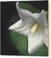 White Balloon Flower-faux Painting Wood Print