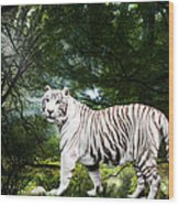 White Bengal Wood Print