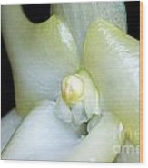 White Blooming Christmas Orchid Wood Print