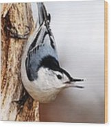 White-breasted Nuthatch 3 Wood Print
