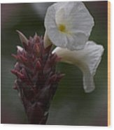 White Bromeliad Flowers Wood Print