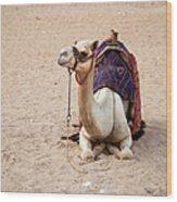 White Camel Wood Print by Jane Rix
