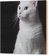 White Cat Wood Print