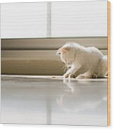 White Cat Playing On The Floor Wood Print by Jose Torralba