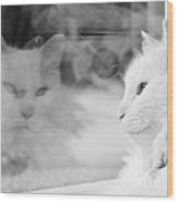 White Cat Reflection With Fly Wood Print