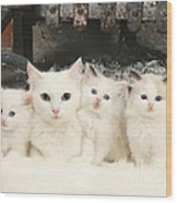 White Cats Wood Print