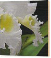 White Cattleya Close-up Wood Print