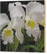 White Cattleyas Wood Print
