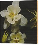 White Columbine Wood Print