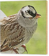White Crowned Sparrow II Wood Print