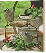 White Crowned Sparrows On The Flower Pot  Wood Print