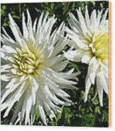 White Dahlias In Autumn  Wood Print