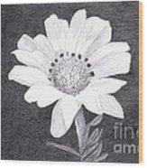 White Daisy Flower Wood Print