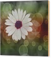 White Daisy In A Sunset Wood Print