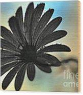 White Daisy Silhouette Wood Print