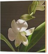 White Dendrobium 2 Wood Print