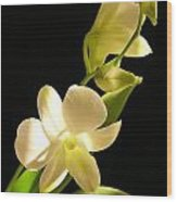 White Dendrobium Wood Print