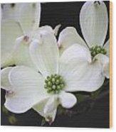 White Dogwood Blossoms Wood Print