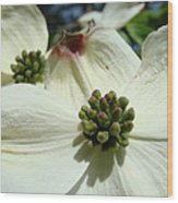 White Dogwood Flowers Art Prints Floral Wood Print by Baslee Troutman