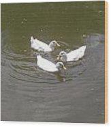 White Ducks Swimming Wood Print