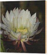 White Echinopsis  Wood Print