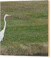 White Egret Crane Wood Print
