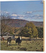 White Faced Cattle In Autumn Wood Print