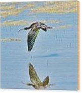 White Faced Ibis In Flight Wood Print