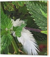 White Feather Wood Print