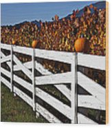 White Fence With Pumpkins Wood Print