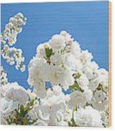 White Floral Blossoms Art Prints Spring Tree Blue Sky Wood Print