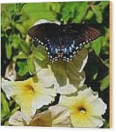 White Flower Butterfly Wood Print