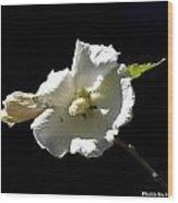 White Flower Wood Print