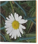 White Flower On The Fence Wood Print