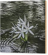 White Flowers In The Stream Wood Print