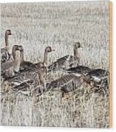 White Fronted Goose - 0017 Wood Print