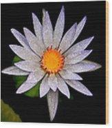 White Frost Flower Wood Print