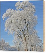 White Frost Tree Wood Print