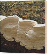 White Fungus Wood Print