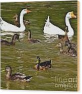 White Geese And Ducks Wood Print