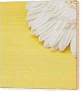 White Gerbera Daisy With Yellow Copyspace Wood Print