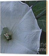 White Glory Wood Print
