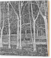 White Grove Wood Print