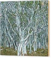 White Gum Forest Wood Print