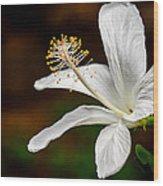 White Hibiscus II Wood Print