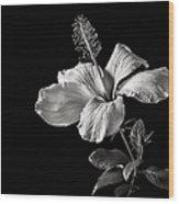 White Hibiscus Inn Black And White Wood Print