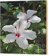 White Hibiscus Wood Print