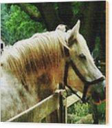 White Horse Closeup Wood Print